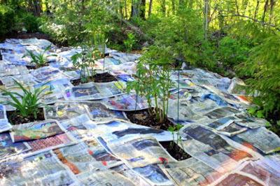 periódico herbicida