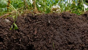 tipo de suelo