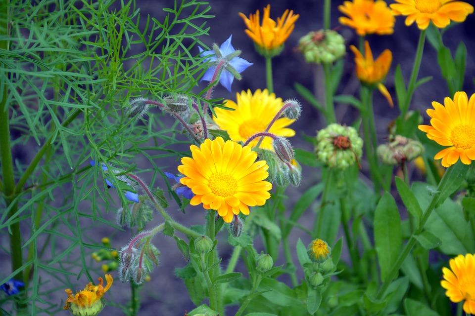 plantas medicinales casa