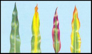 fosforo plantas
