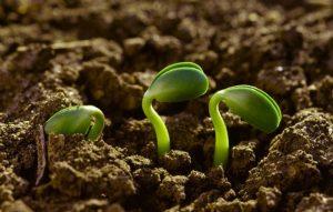 nutrientes esenciales para las plantas