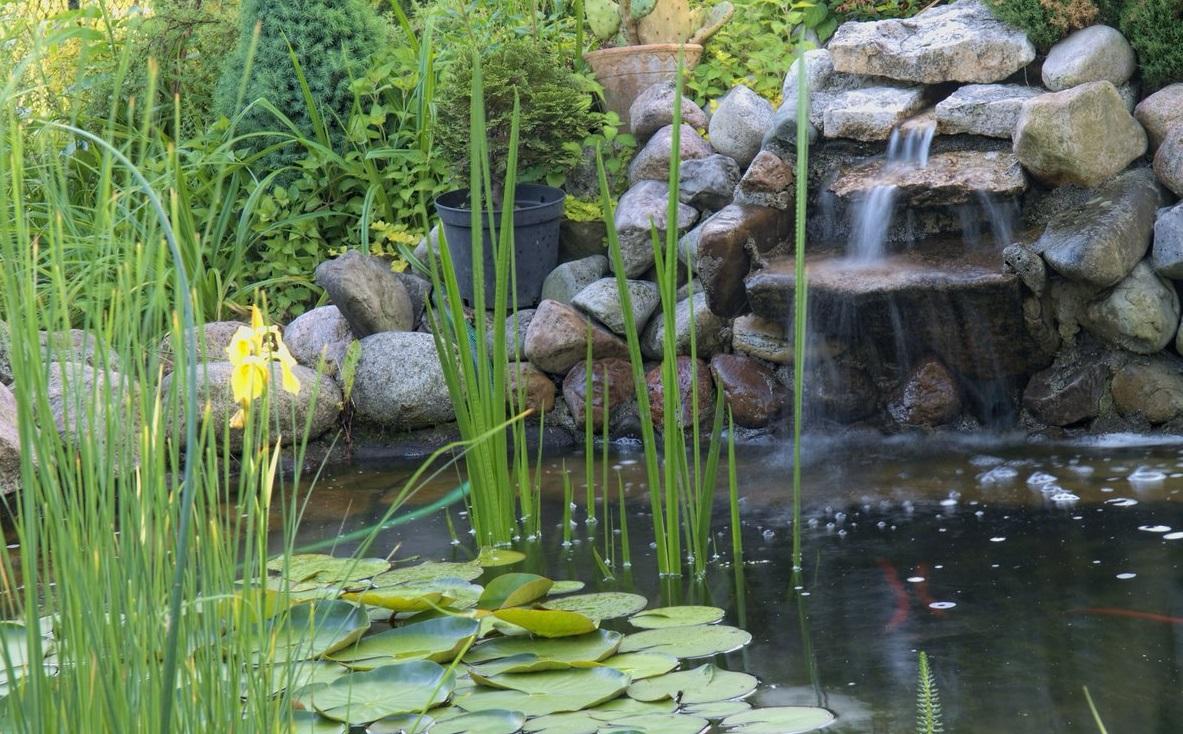 los beneficios de tener un estanque la huerta de ivan - Estanques Jardin