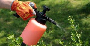 jabón insecticida