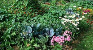 biodiversidad huerto