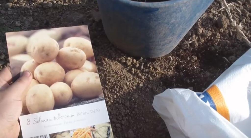 cultivar patatas con sacos