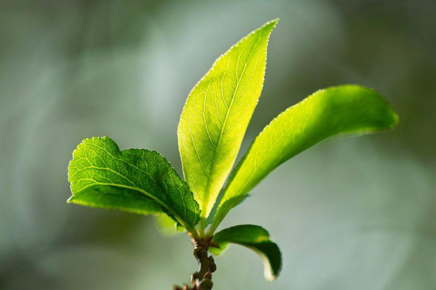 Manchas amarillas en las hojas la huerta de ivan for Concepto de plantas ornamentales
