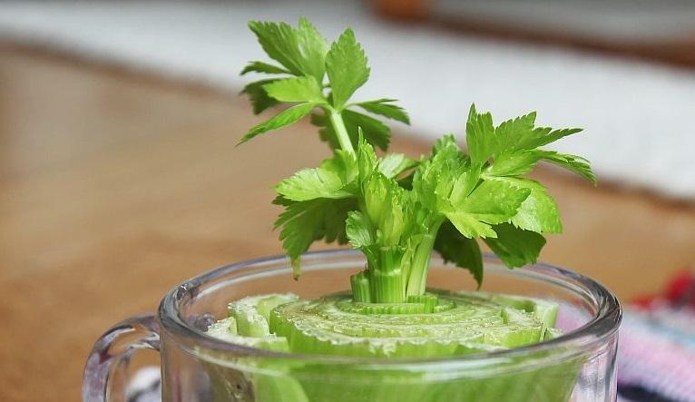 7 vegetales