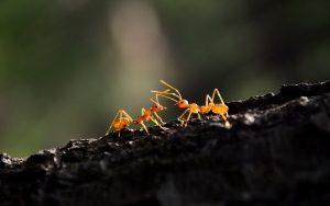 Como eliminar hormigas del compost