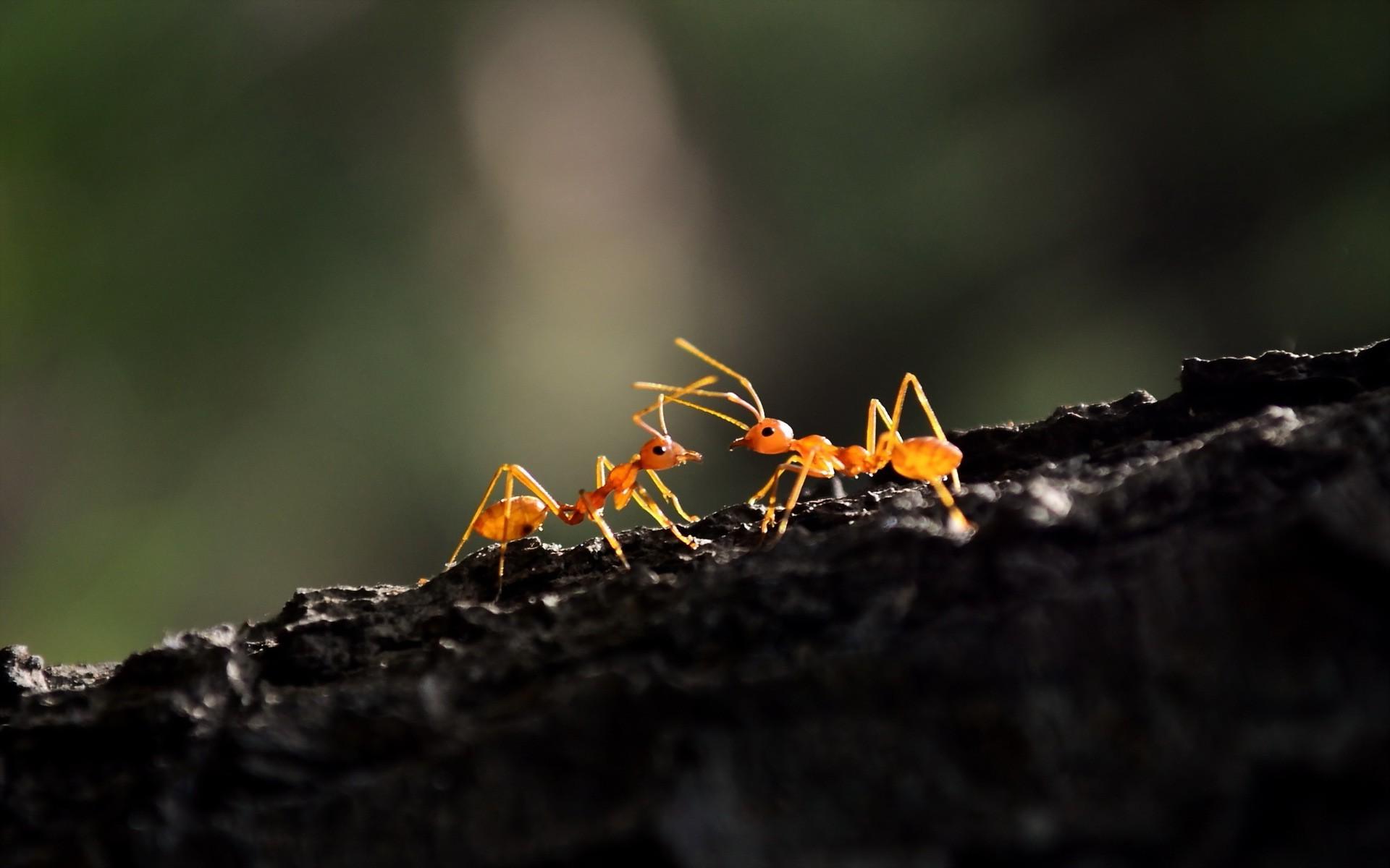 Como eliminar hormigas del compost la huerta de ivan - Como eliminar hormigas ...