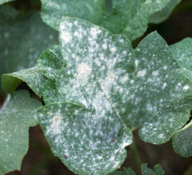 Fungicidas ecologicos