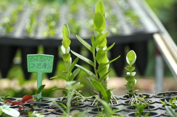 Esqueje archivos la huerta de ivan for Planta ornamental que se reproduzca por esquejes