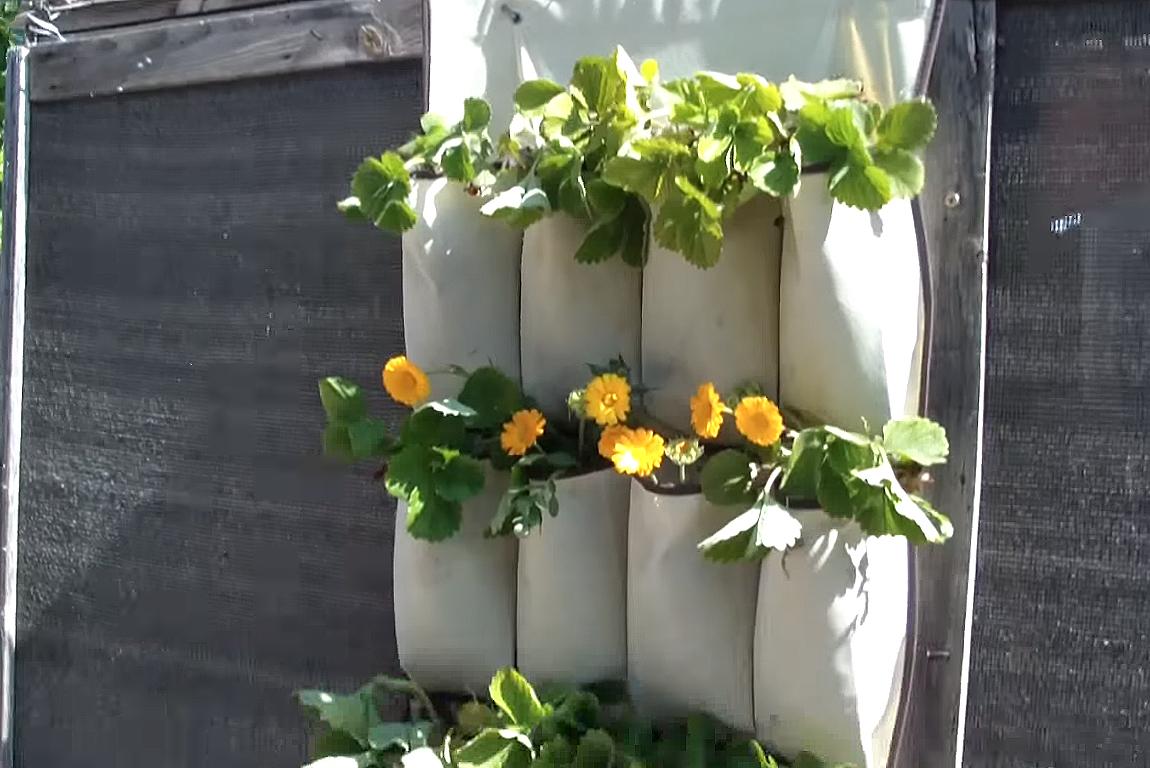 Como hacer una huerta vertical con un zapatero la huerta for Como se realiza un huerto vertical