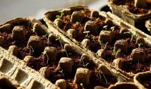 semilleros biodegradables