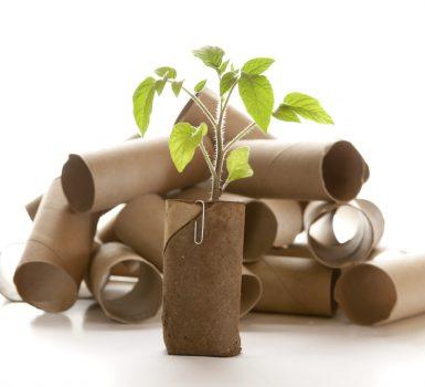 Como hacer semilleros biodegradables