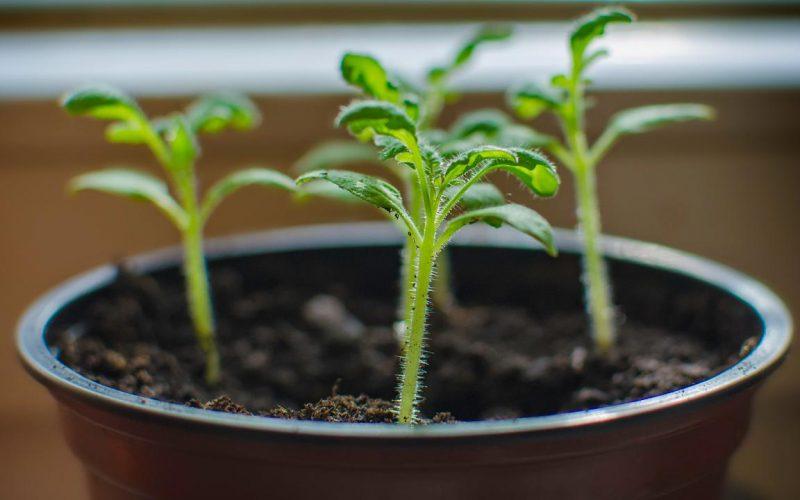 5 Plantas de esquejes fáciles
