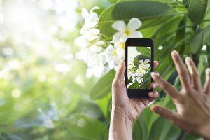 Identificar Plantas desde el móvil