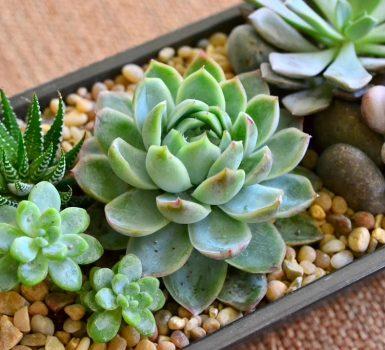 5 Plantas ideales