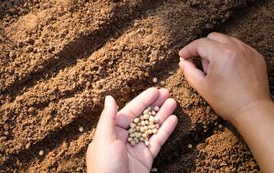 conservar las semillas