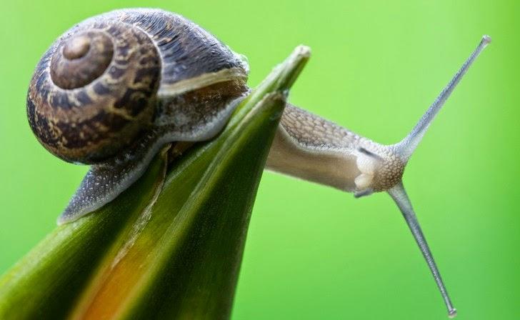 Remedios contra los caracoles