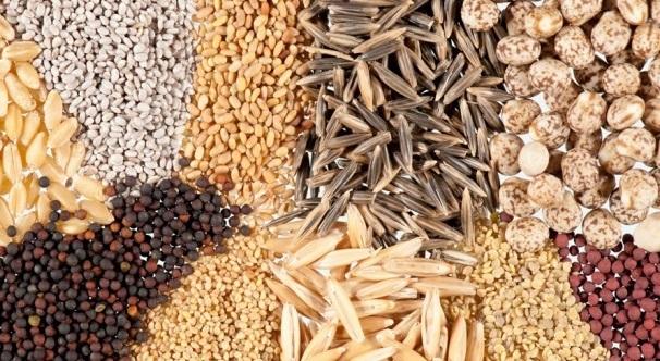 semillas f1