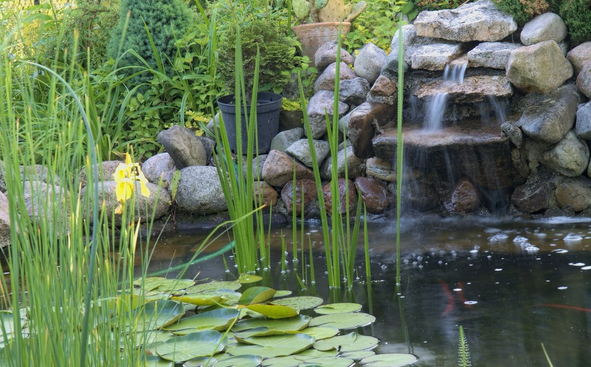 Los beneficios de tener un estanque la huerta de ivan - Estanques en el jardin ...