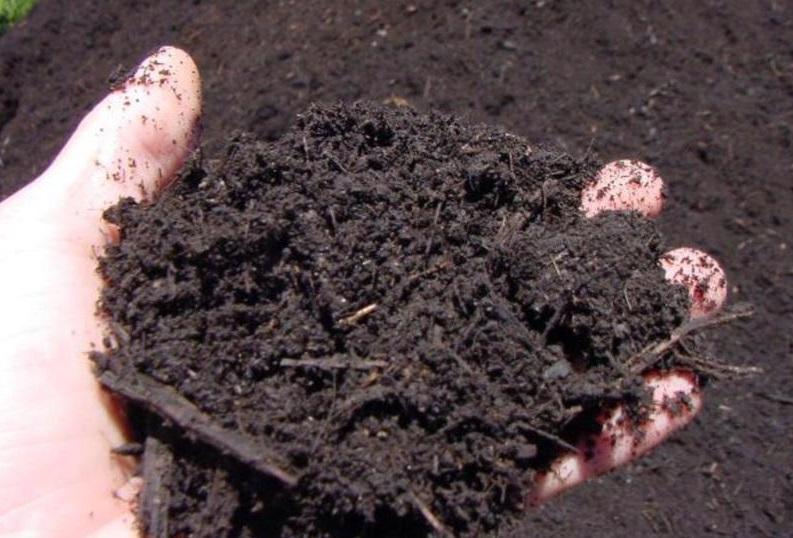 utilizar el compost