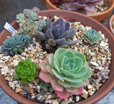 7 plantas diminutas