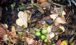 compost hormigas