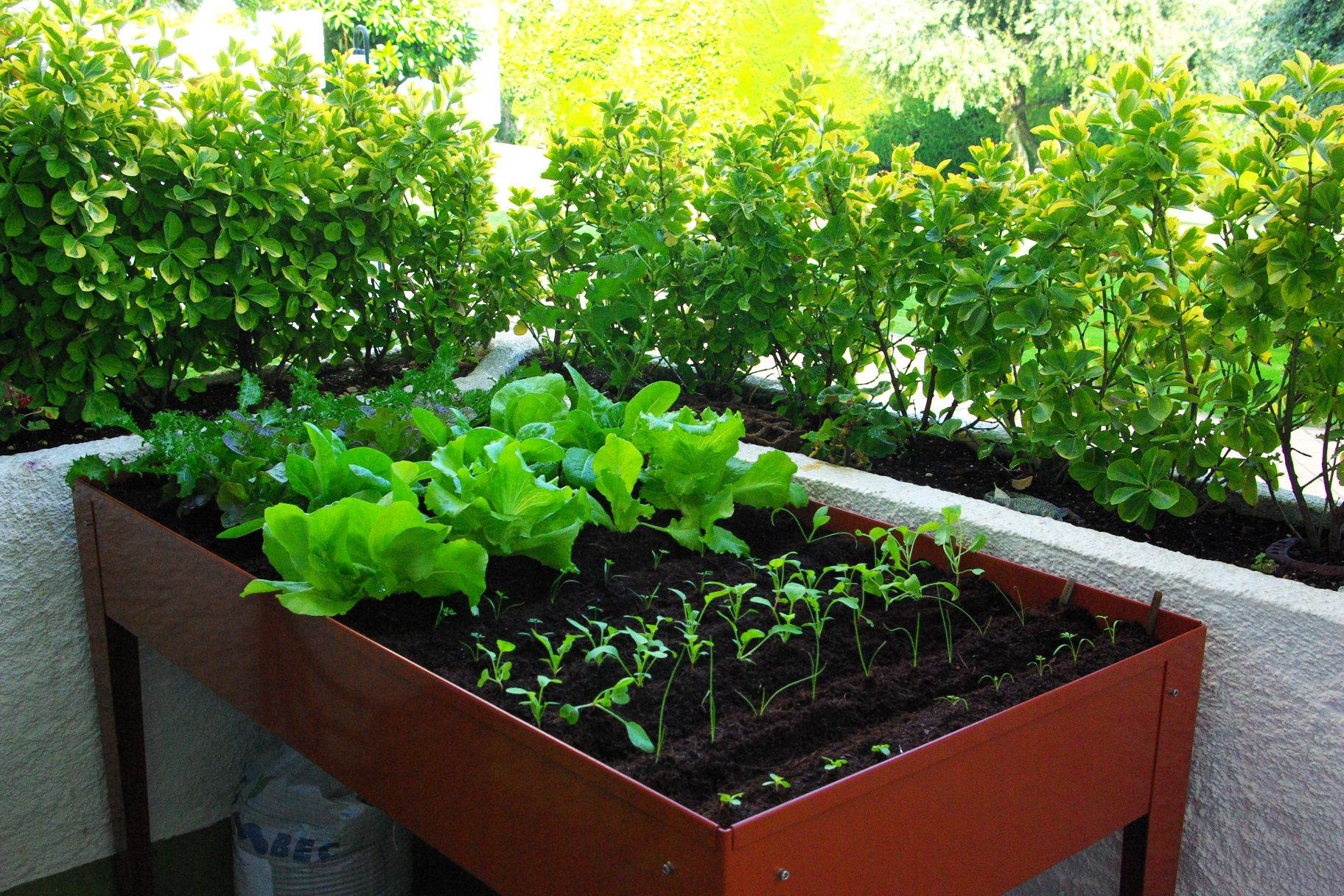 C mo empezar un huerto con macetas la huerta de ivan - Como empezar un jardin ...