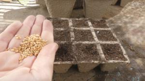 semilleros huerta
