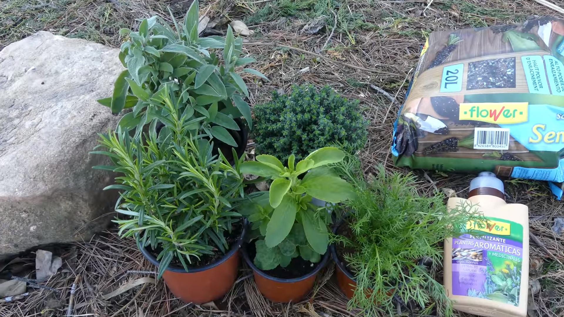 5 arom ticas que necesitas en el huerto ecol gico la