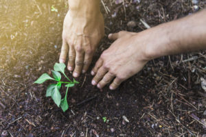 usos de la vermiculita