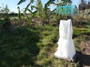 Como proteger las plantas del frió