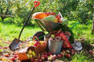 presupuesto bosque alimentos