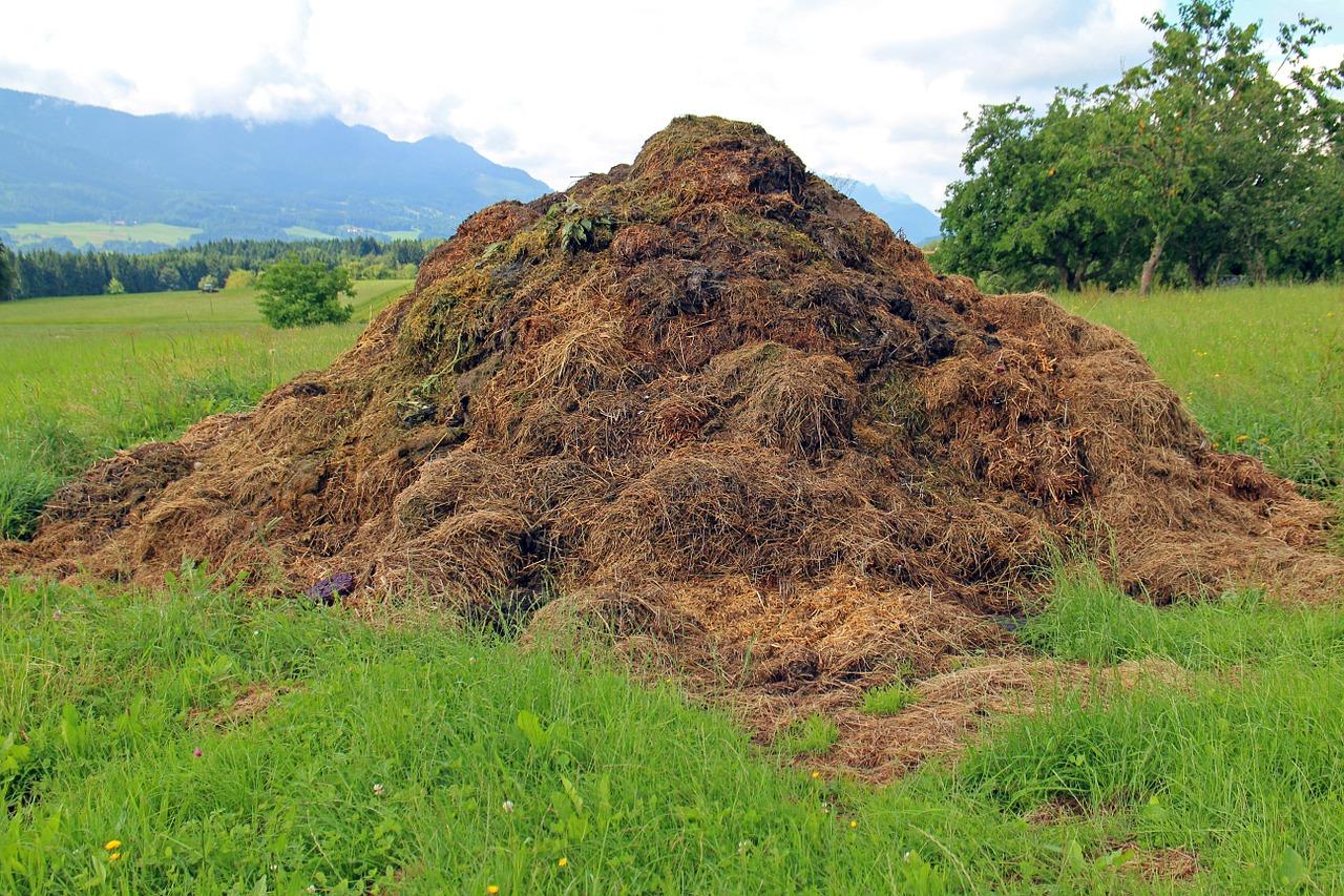 Convierte tu basura orgánica en compost