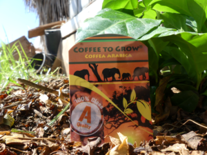Como plantar café en el huerto o jardín