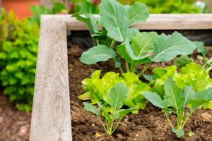 Diferencias entre Humus de Lombriz, Compost y Estiércol