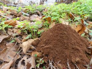7 usos de los posos de café en el huerto