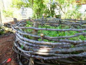 Mejora el crecimiento de frutales
