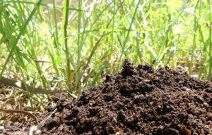 Errores mas comunes en el compost