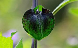 Plagas en tus Plantas
