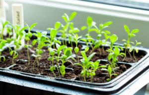 Que sembrar en febrero y las tareas del huerto