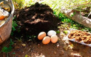 5 Trucos para mejorar el suelo