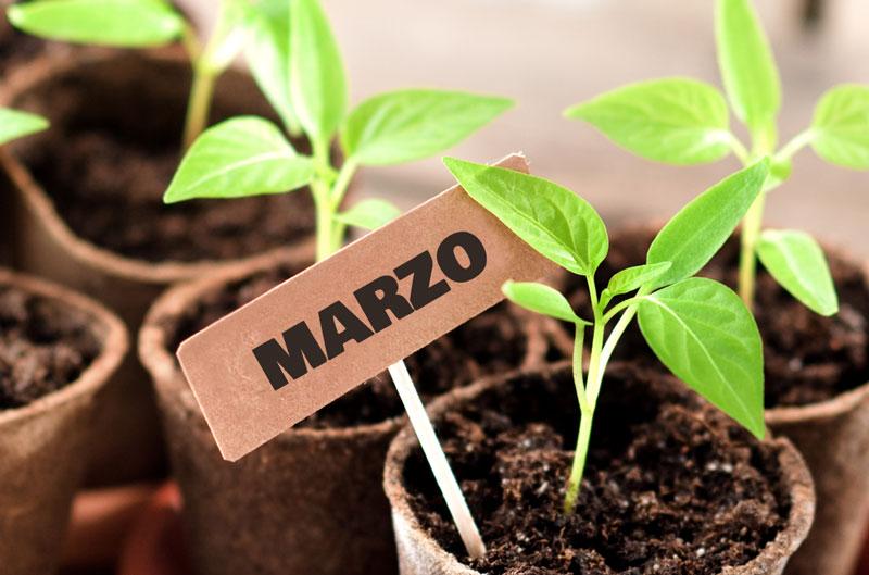 Que sembrar en marzo y las tareas del huerto