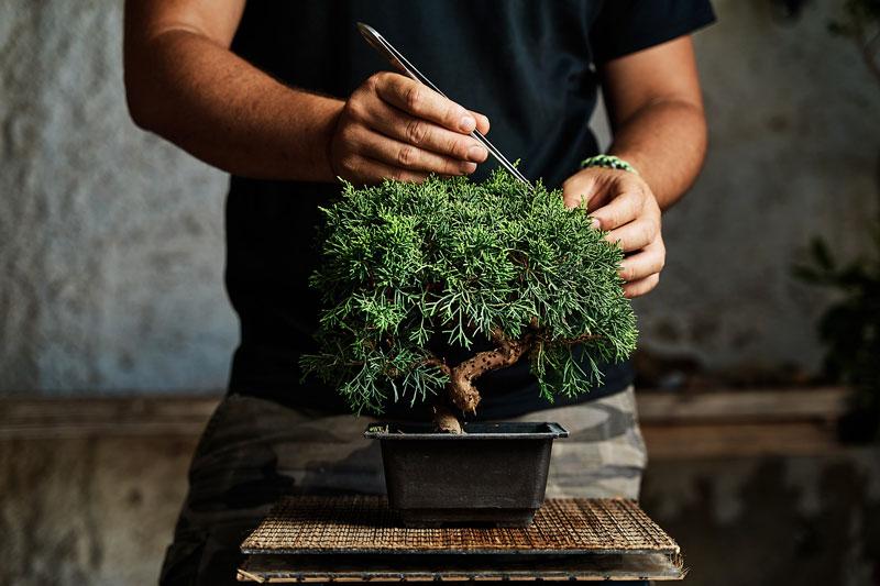 Cómo empezar un bonsái fácil y barato
