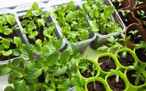 Que sembrar en abril y las tareas del huerto