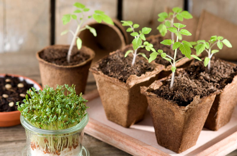 Que sembrar en mayo y las tareas del huerto