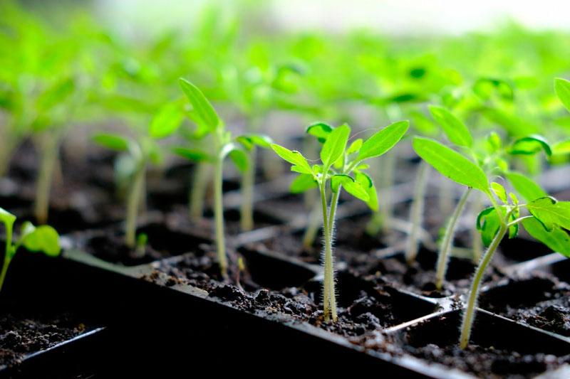 Que sembrar en Junio y las tareas del huerto