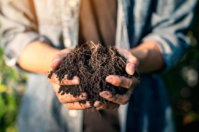 Diferencia entre abono orgánico y químico