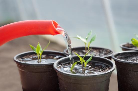 exceso de agua en las plantas